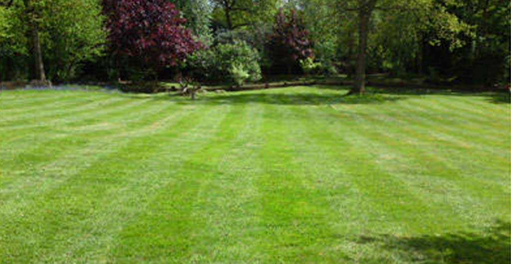 Photo of mowed lawn shwoing example of Hocus Crocus grass cutting services