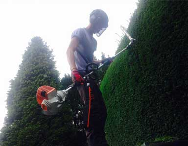 Hedge Trimming a Conifer Hedge in a Harrogate residence