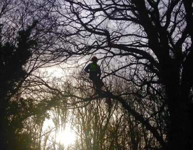 http://localhost:8080/hocuscrocus/harrogate-tree-services/