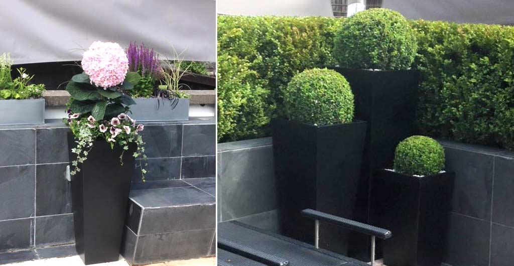 Magnificent examples of our planter arrangement arranged bespoke for commercial premises in Harrogate